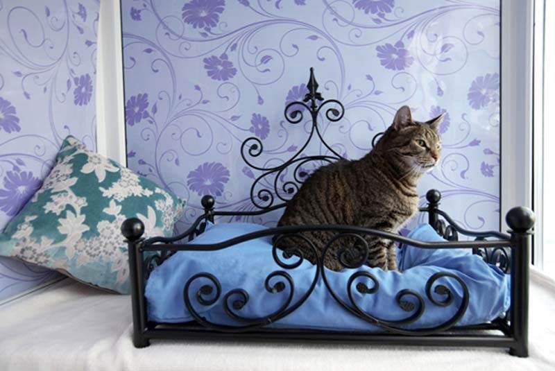 Где оставить кошку на время