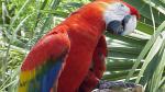 Попугай говорящий