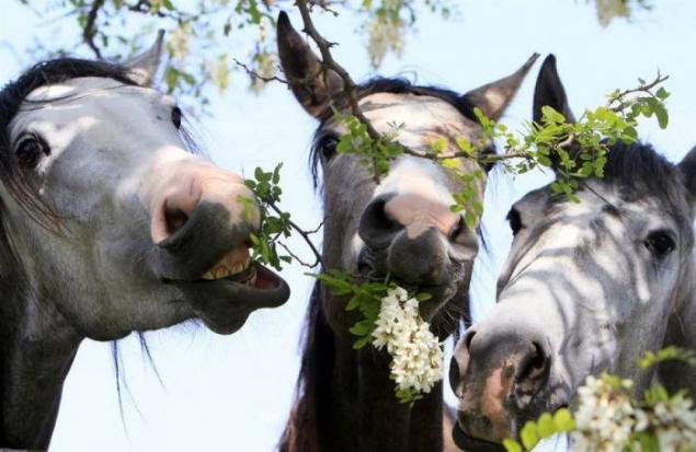 корм и вода для лошади