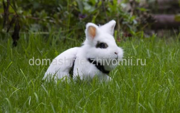 кролик мини