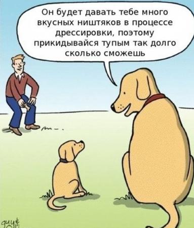 подкормка собак