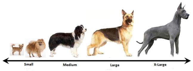 размер собаки