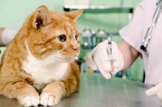 вакцинация кошек