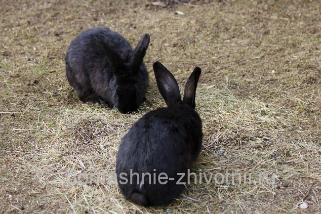 Разведение кроликов: практическое руководство - Домашние животные