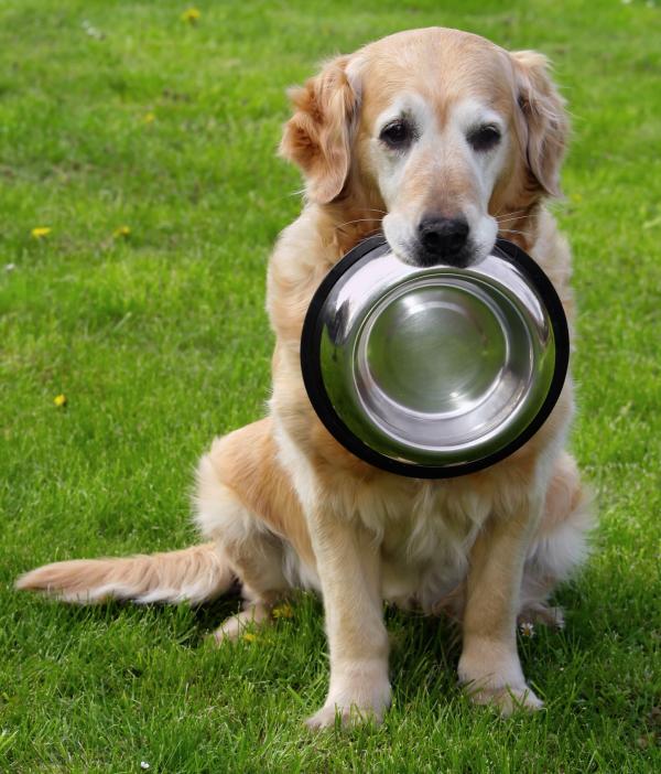 5 преимуществ влажного питания - Домашние животные