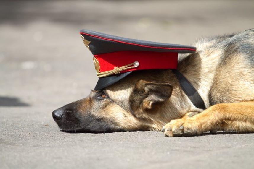 Как научить собаку искать людей, грибы и деньги! 22