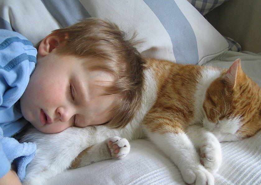 Кошачий сон: что снится кошкам - Домашние животные