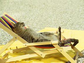 тепловой удар у собак и кошек
