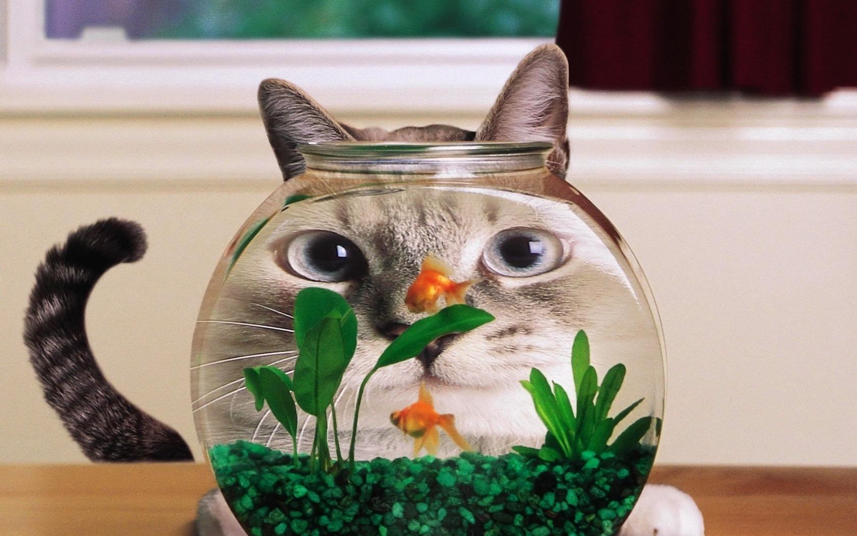 Ученые выяснили, что собакам и кошкам полезны водоросли 18