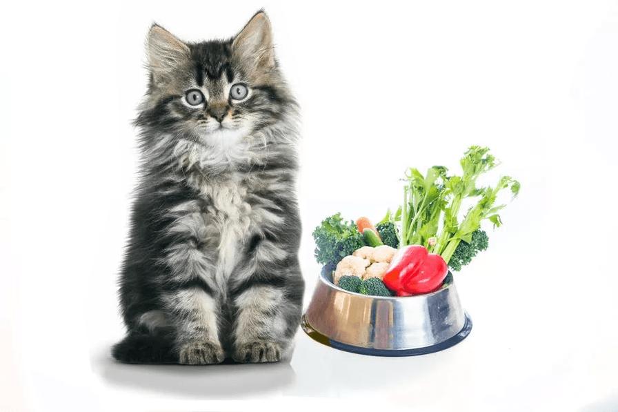 Рекомендуемые фрукты и овощи для кошек 3