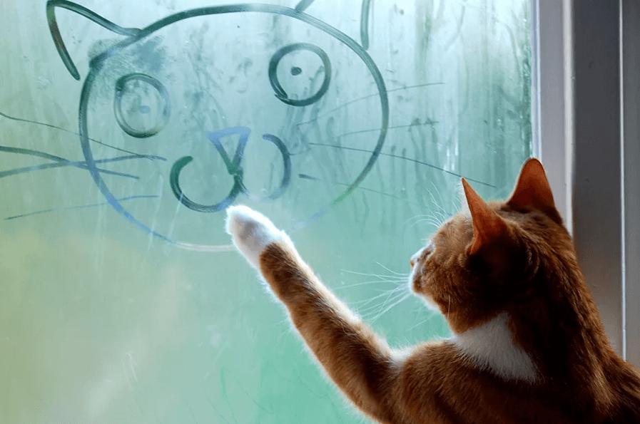 Как узнать возраст кошки - Домашние животные