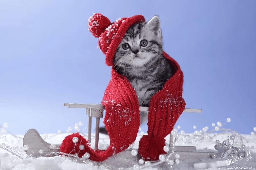 Как ухаживать за кошкой зимой 2