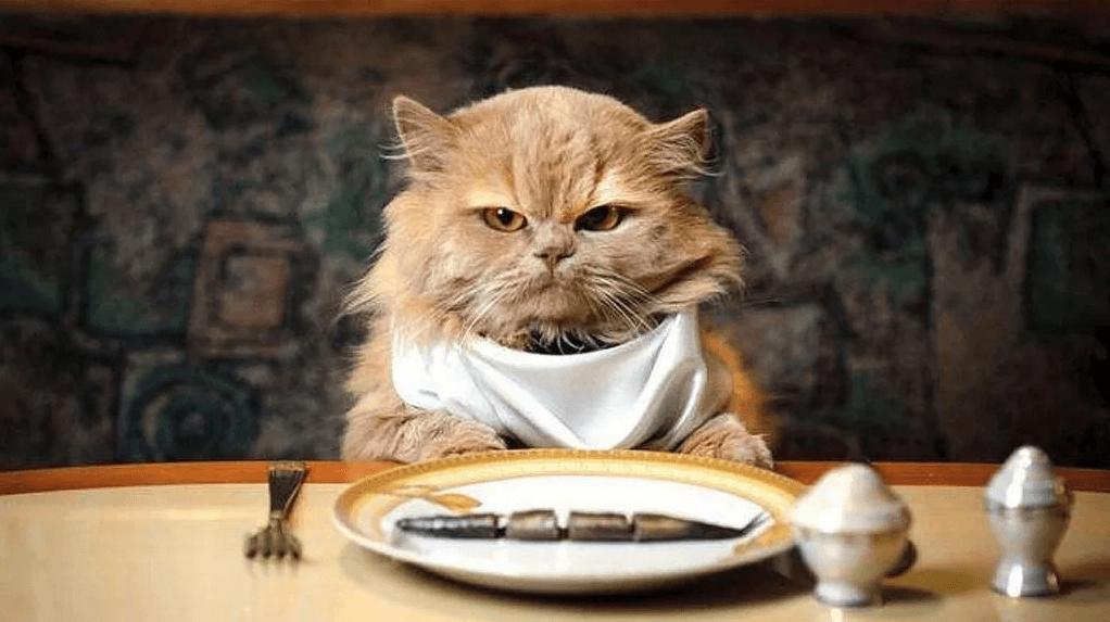 Сколько мы должны кормить своего кота? - Домашние животные