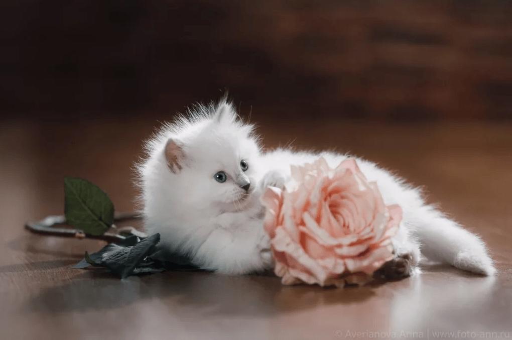 Самые популярные породы кошек - Top 10! - Домашние животные