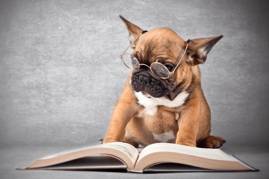 Сколько слов знают собаки? 12