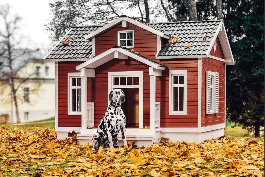 Основные советы для владельцев домашних животных 10