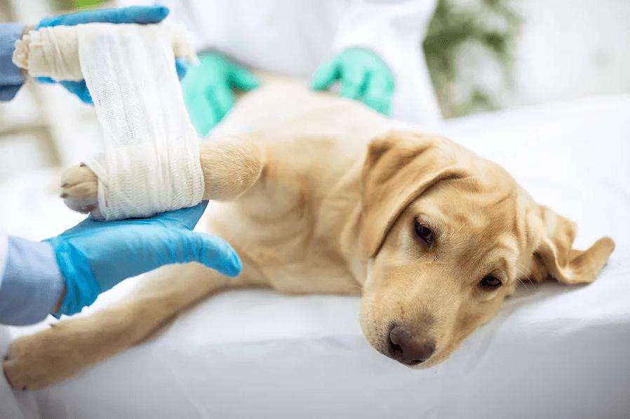 Как помочь собаке, которая постоянно кусает лапы