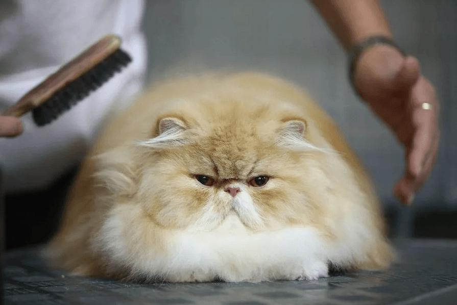 Щетки для длинношерстных кошек