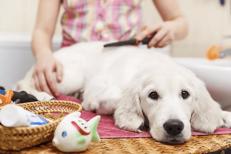 Типы собачьих щеток и расчесок