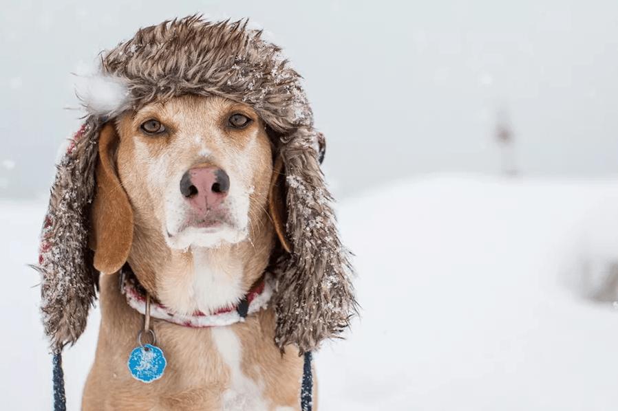 Зимние опасности для здоровья собак