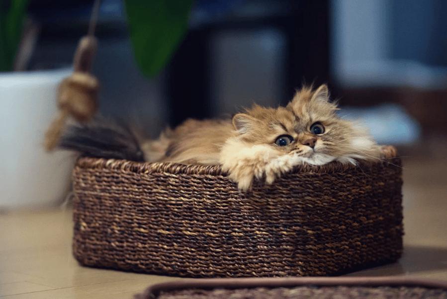 Что кошки любят больше всего