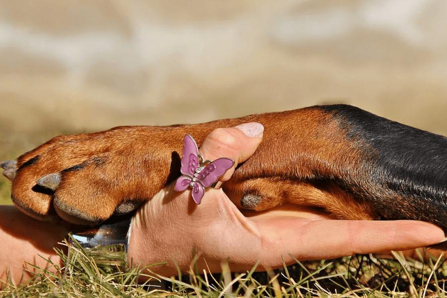 проблемы с собачьими лапами