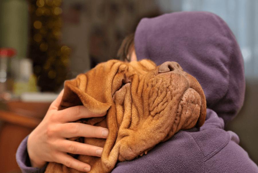 слепота у собак