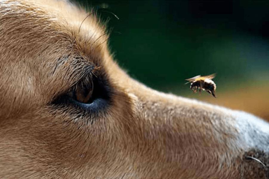 собака пчела