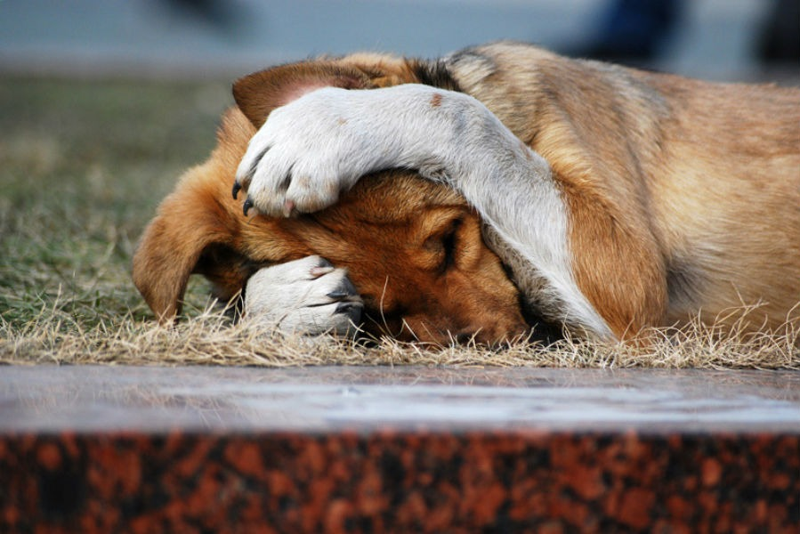 фобии собаки