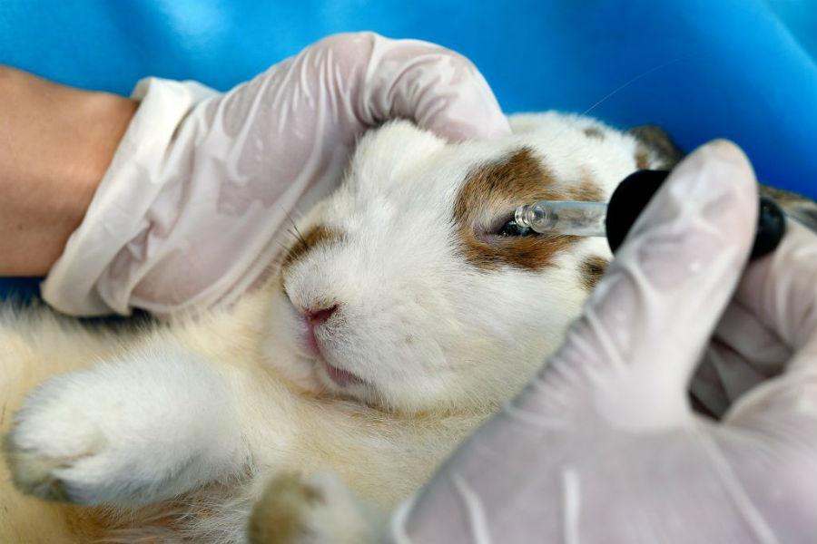 коньюктевит у кроликов
