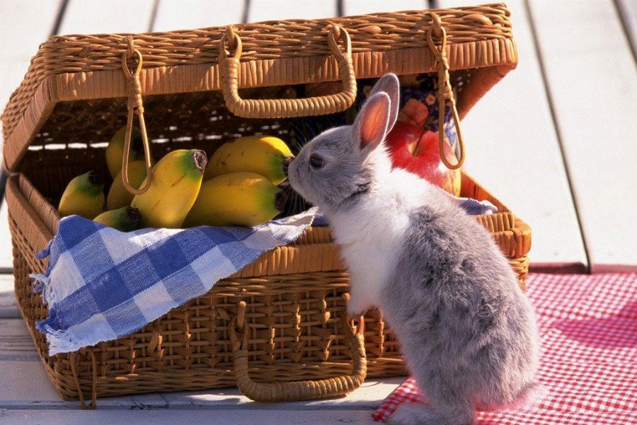 кролик кормление