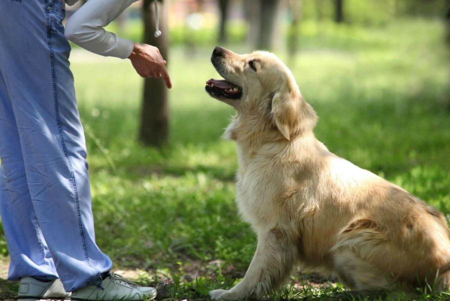 лайфхаки в воспитании и дрессировке собак