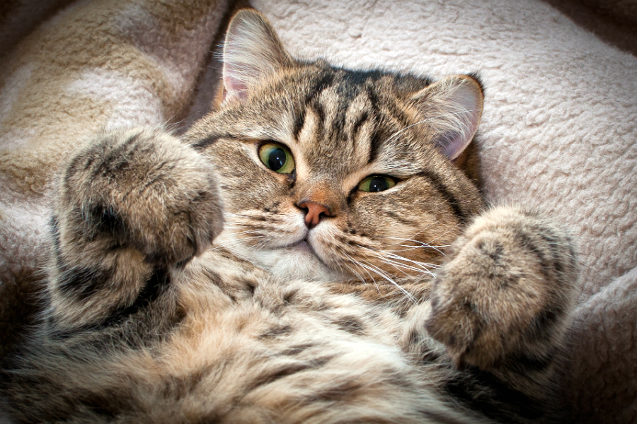Кошачий характер - кот - няшка