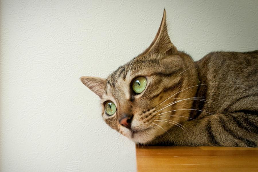 Кошачий характер - кот сторож
