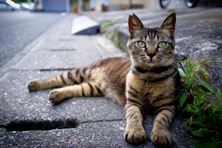 Кошачий характер - кот сфинкс