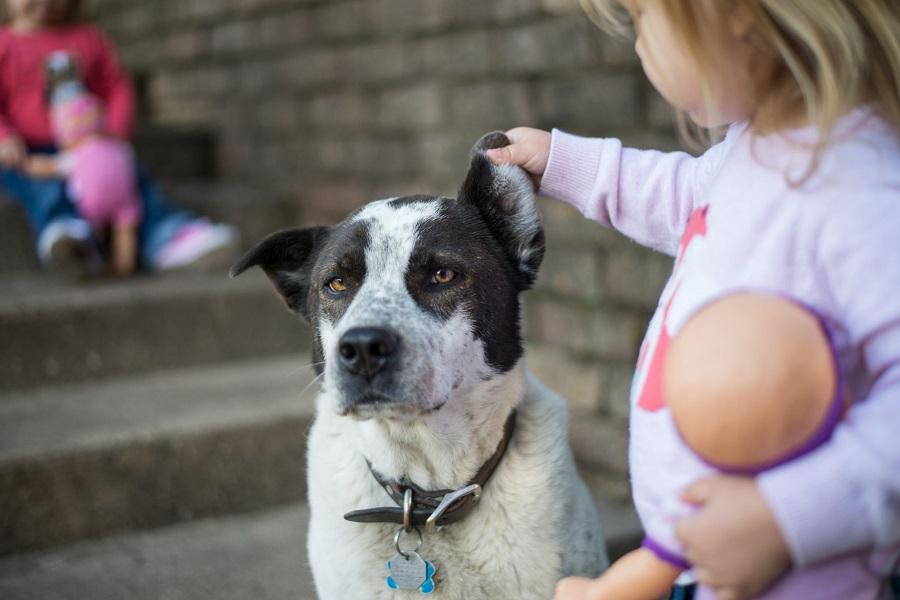 Дети и их поведение - собаки боятся детей