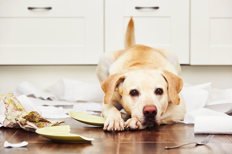Одиночество - собаки боятся расставания с хозяином