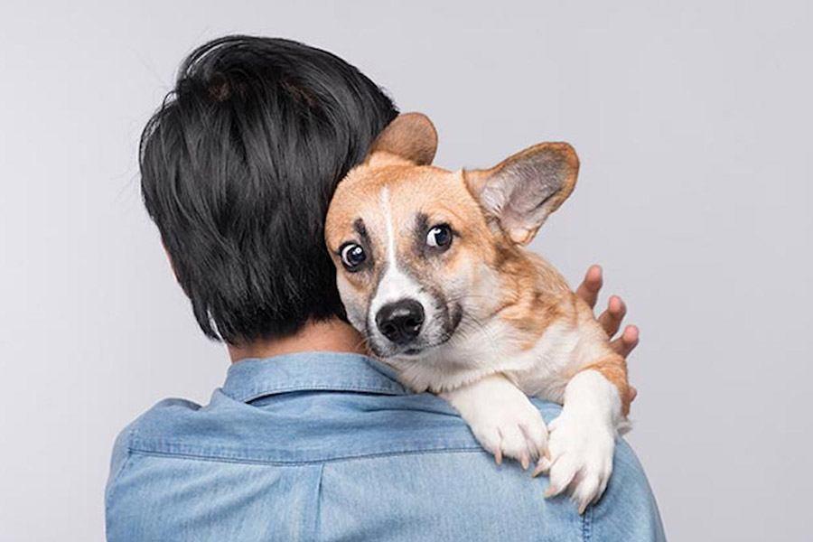 5 самых больших собачьих страхов - чего больше всего боятся ваши питомцы